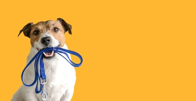 dog with leash on mouth