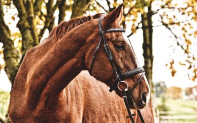 Horse Hardware – Harnessing a Draft Horse